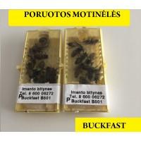 Buckfast bičių motinėlės - PORUOTA 2020