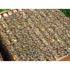 Bičių šeimelė Carnika 10 Dadano pusrėmių rėmelių(magazininių)